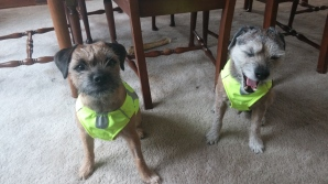 Wally had words to say about his safety vest